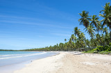 Fototapeta Palm trees on wide remote tropical Brazilian island beach in Bahia Nordeste Brazil