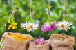 Healing herbs bunches and hessian bags with dried marigold, clov