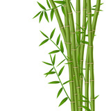 Fototapety Green bamboo stems with leaves isolated on white background