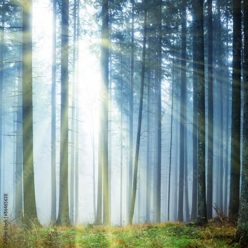 Fototapeta Mysterious fog in the green forest