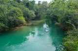 Fototapeta Clear water in the rivers near Bonito, Brazil