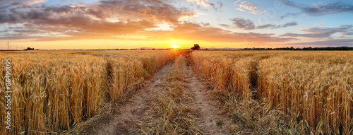 obraz lub plakat Pole pszenicy o zachodzie słońca, panorama