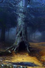 albero magico © maxym70