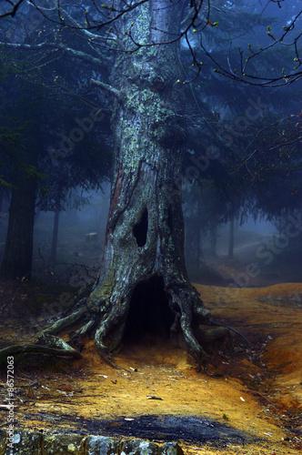 albero magico