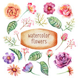 Fototapety Watercolor flowers