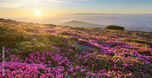 Landscape with mountain flowers at dawn