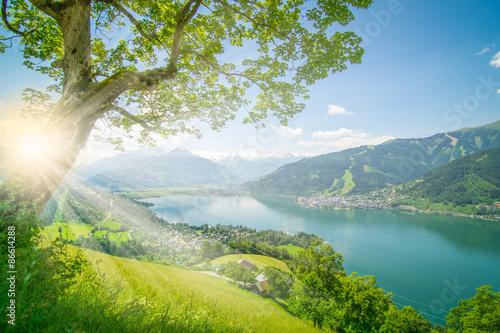 Baum vor Zell am See