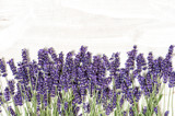 Lavender flowers over white wooden texture background - 86641488
