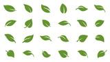 Fototapety leafs green