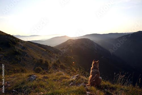 Poster cane guarda il panorama