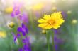 yellow flower, closeup