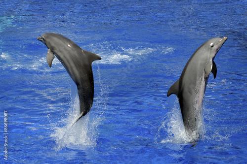 Obraz dolphins underwater and breaking splashing wave above them