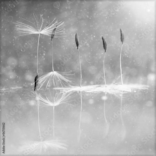 Foto op Aluminium Bestsellers dandelion fluff, design, ballet
