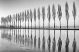 Fototapety Alberi riflessi sul lago all'alba in bianco e nero