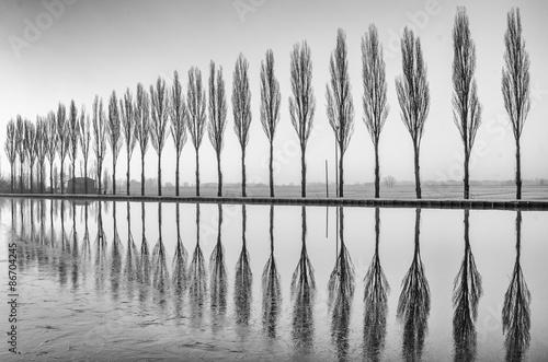 Zdjęcia Alberi riflessi sul lago all'alba in bianco e nero