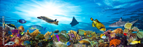 Plagát, Obraz underwater sea life coral reef panorama with many fishes and marine animals