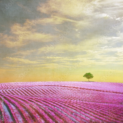 Fototapeta Surreal landscape with single tree