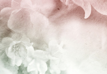 sweet color roses flower in soft and blur style on mulberry paper texture