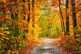 Fototapety Autumn forest