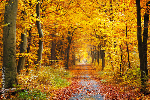 Foto Spatwand Weg in bos Autumn forest