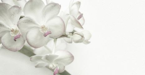 Sweet color orchids in soft color and blur style on mulberry paper texture for background