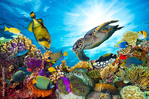 Fototapeta underwater sea life coral reef panorama with many fishes and marine animals