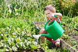 Little boy pours vegetable garden