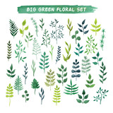 Vector watercolor floral set. Big green floral collection.