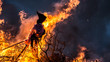 Witch Burning.  Burning a witch effigy is a Danish midsummer tradition