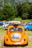 Orange beetle and surf in a sunny day