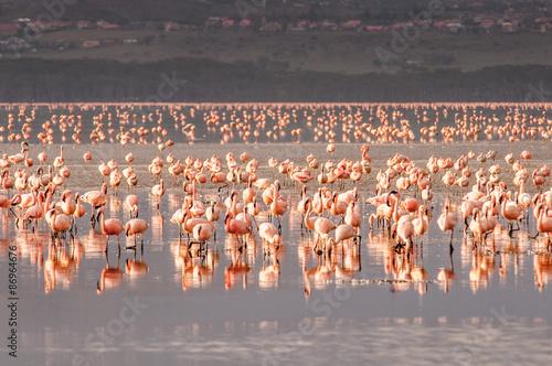 Obraz na Plexi Flamingo