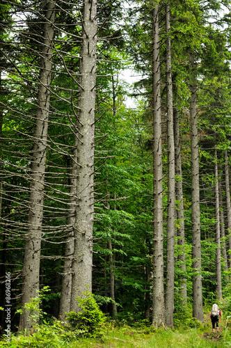 Keuken foto achterwand Bossen view inside of the forest on the fir trees