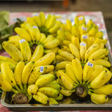 Cluster of Dainty bananas or Pisang Mas for retail sale poster