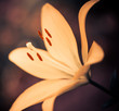 yellow flower at abstract background