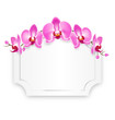 Pink Orchid Flowers with Celebration Frame Isolated on White Bac