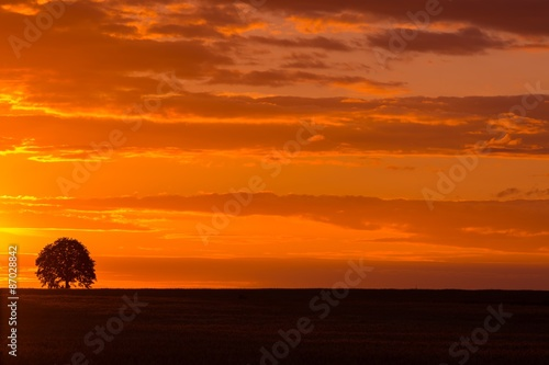 Foto op Canvas Baksteen Landscape with orange sunset sky over filed and trees