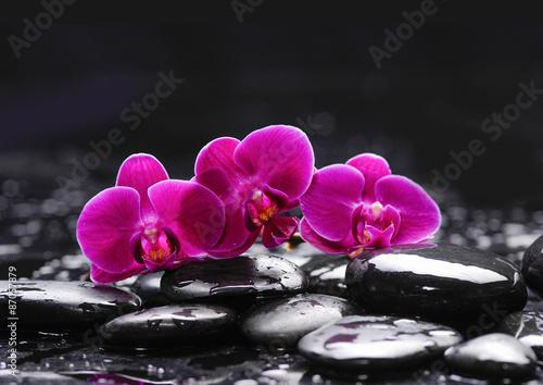 rozowa-orchidea-i-kamienie