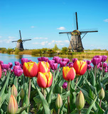 Fabulous landscape of Mill and tulips in Holland