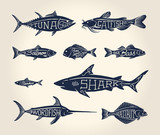 Fototapety Vintage illustration of fish with names