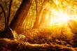 Sonnige Herbstszene im Wald