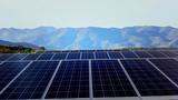 Solar  farm in the morning