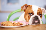 Fototapety Sad Looking British Bulldog Tempted By Plate Of Cookies