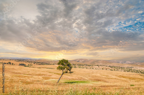 Papiers peints Beige Lonely tree, Negev Desert