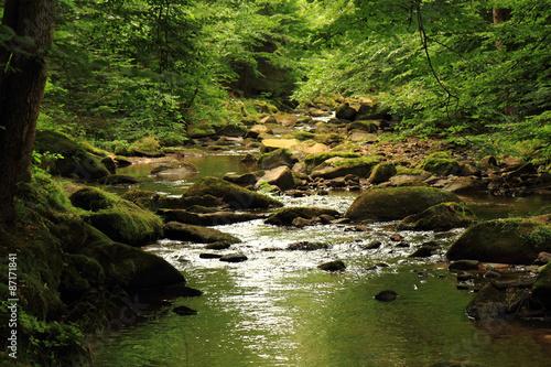 Fototapeta river in the forest