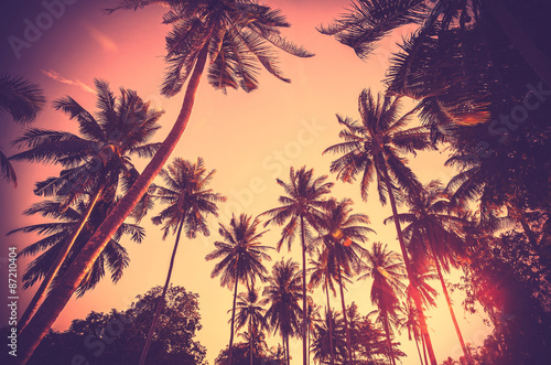 Fotobehang Strand Vintage toned palm tree silhouettes at sunset.