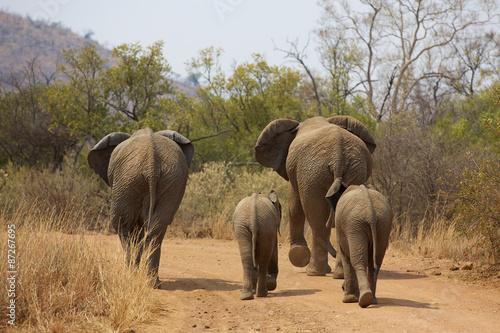 Zdjęcia na płótnie, fototapety na wymiar, obrazy na ścianę : African elephants walking away