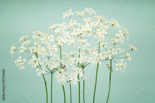 White tiiny flowers on soft green background