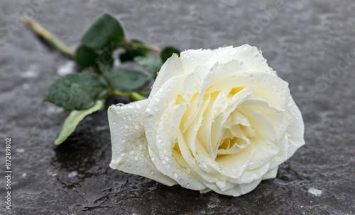 Rose der ewigen Erinnerung