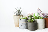 Succulents and cactus in different concrete pots on the white sh - 87385440