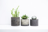 Three succulents or cactus in concrete pots over white backgroun - 87385443